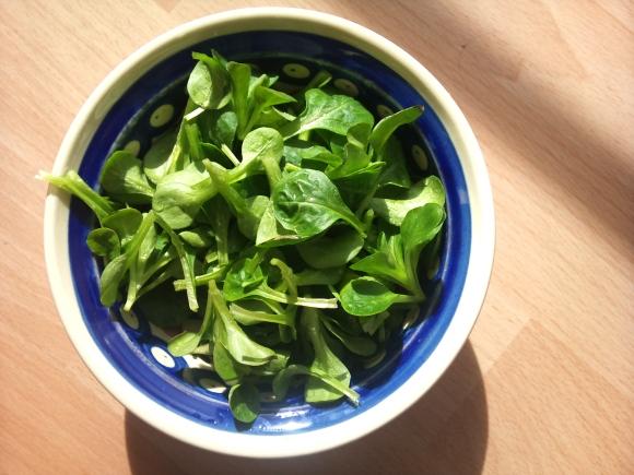 Frisch vom Balkon geernteter Feldsalat in einer Salatschüssel.