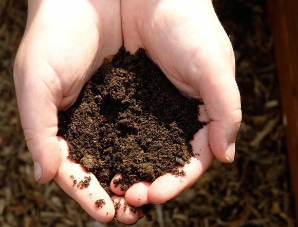 Zwei Hände halten ein bisschen mit Humus angereicherte sandige Erde.