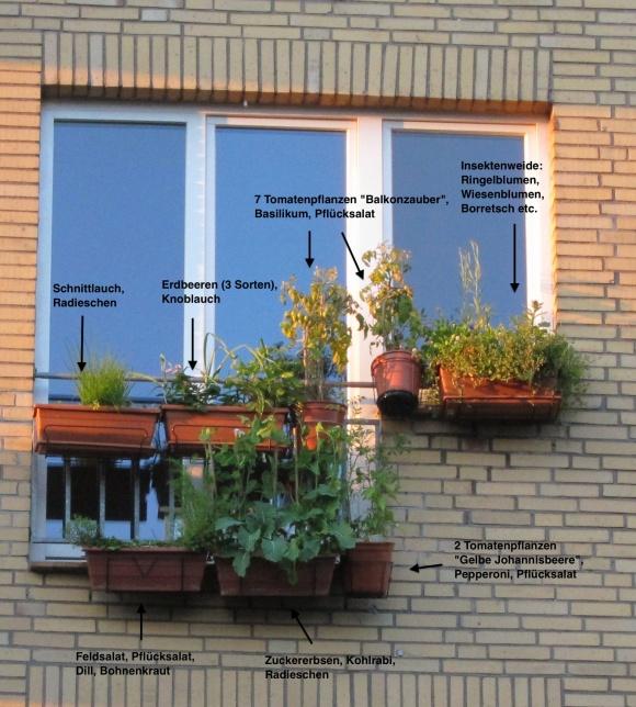 Bepflanzung der Balkonkästen mit Obst, Gemüse und Kräutern in 2012