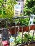 Balkonkästen mit PET-Flaschen zur Bewässerung