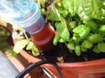 Nahaufnahme eines Blumat Flaschenadapters für PET-Flaschen in einem Balkonkasten