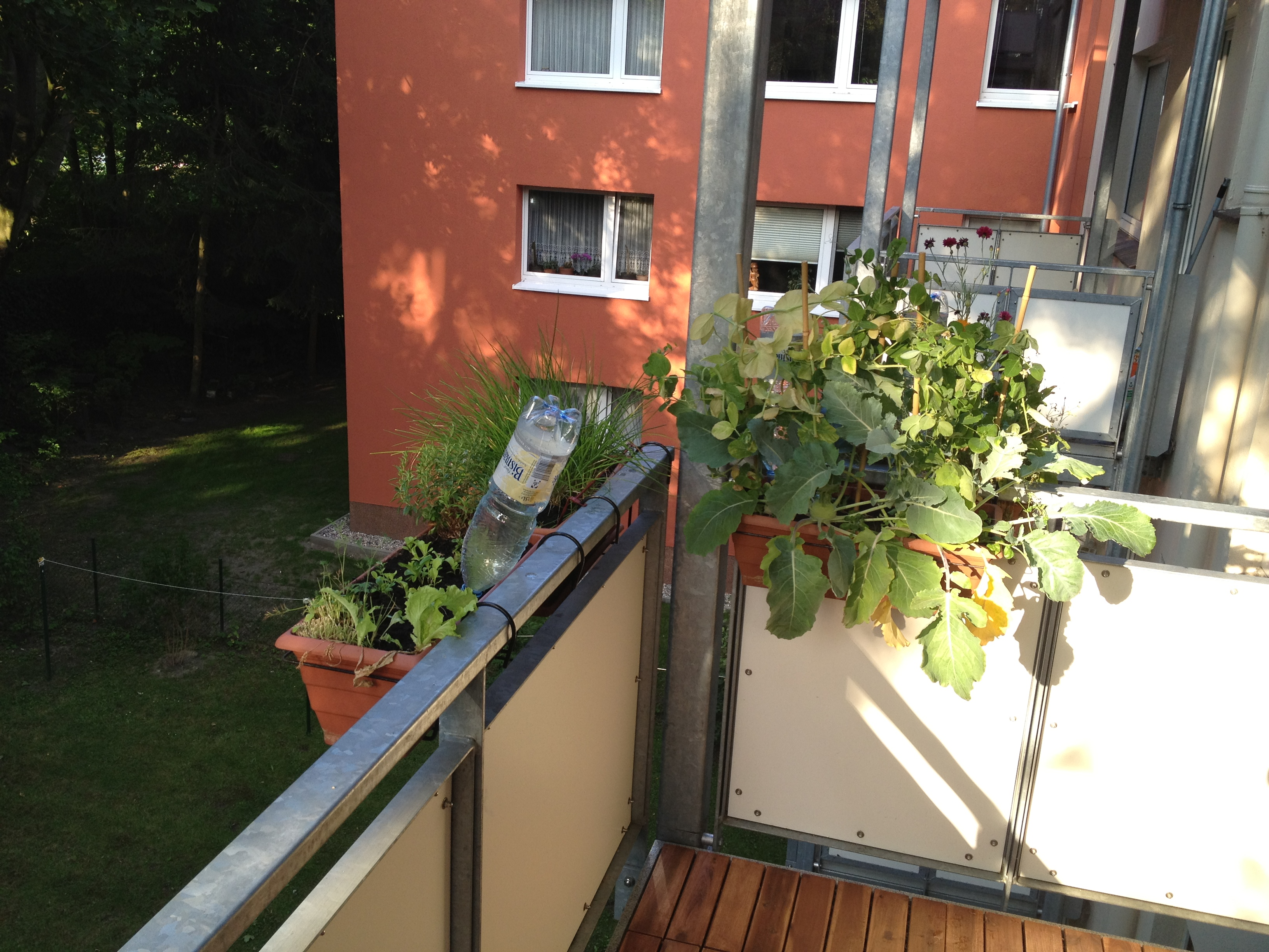 pflanzen am balkon paprika auf dem balkon pflanzen wann wie kr uter pflanzen ein balkon voller. Black Bedroom Furniture Sets. Home Design Ideas
