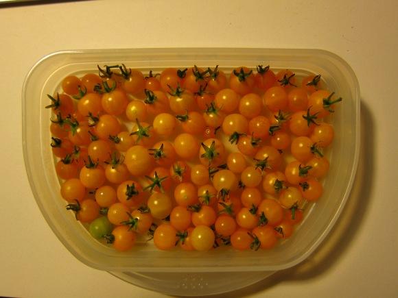 Tomaten – Gelbe Johannisbeere
