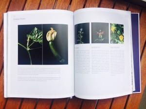 """Doppelseite """"Essbare Blüten"""" aus """"Veranda Junkies"""""""