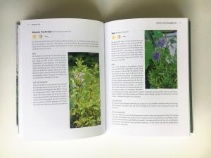 """Eine Doppelseite aus dem Buch """"Biogärtnern am Fensterbrett"""" mit Pflanzenporträts von Ysop und Türkischem Drachenkopf"""